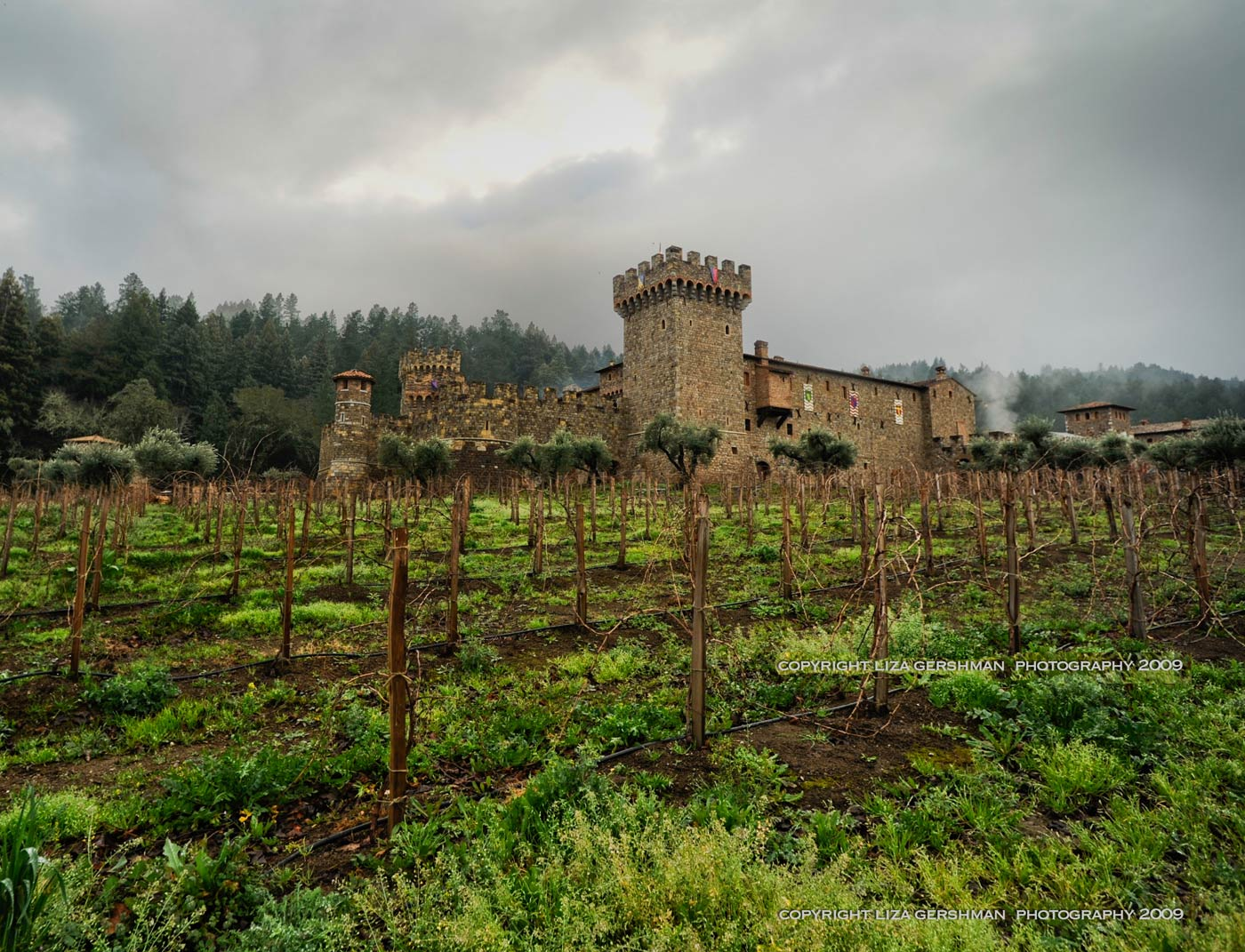St. Supery Vineyards   Señorita Vino