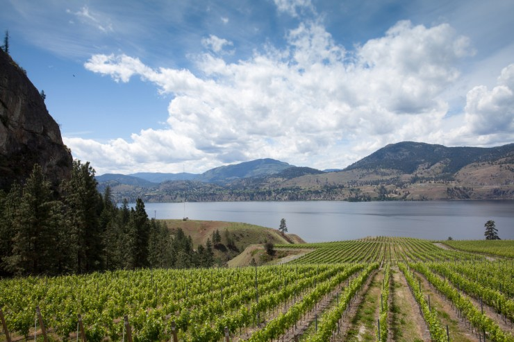 Lakeside vineyards. (Image courtesy of Wines of British Columbia).